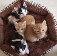 Mixed Cats for sale in California City, CA, USA. price: NA