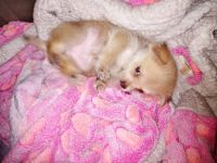 Mixed Puppies for sale in Auburndale, FL 33823, USA. price: NA