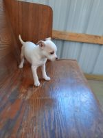 Mixed Puppies for sale in Geneva, IN 46740, USA. price: NA