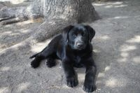 Mixed Puppies for sale in New Effington, SD 57255, USA. price: NA