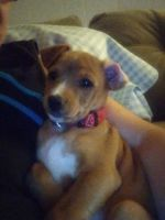 Mixed Puppies for sale in Pittsburgh, PA, USA. price: NA
