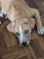 Mixed Puppies for sale in Paterson, NJ, USA. price: NA