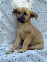 Mixed Puppies for sale in Tampa, FL, USA. price: NA