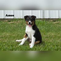 Mixed Puppies for sale in Clare, MI 48617, USA. price: NA