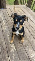 Mixed Puppies for sale in Lithonia, GA 30058, USA. price: NA