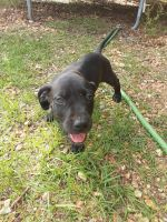 Mixed Puppies for sale in Mantachie, MS 38855, USA. price: NA