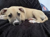 Mixed Puppies for sale in St Marys, GA 31558, USA. price: NA