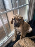 Mixed Puppies for sale in Coatesville, PA 19320, USA. price: NA