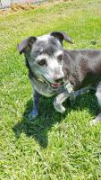 Mixed Puppies for sale in San Pedro, CA 90731, USA. price: NA