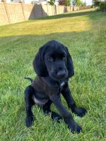 Mixed Puppies for sale in Lehi, UT, USA. price: NA