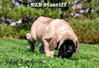 Mixed Puppies for sale in Portola, CA 96122, USA. price: NA