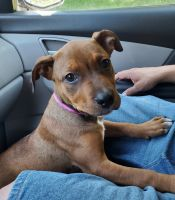 Mixed Puppies for sale in Greeley, CO, USA. price: NA