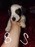 Mixed Puppies for sale in Colorado Springs, CO, USA. price: NA