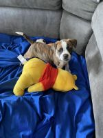 Mixed Puppies for sale in Murrieta, CA, USA. price: NA