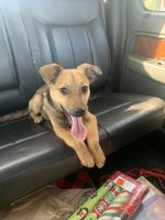 Mixed Puppies for sale in Warner Robins, GA, USA. price: NA