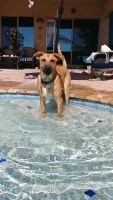 Mixed Puppies for sale in Gold Canyon, AZ, USA. price: NA