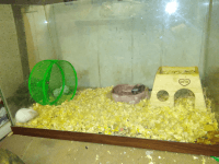 Mouse Rodents for sale in Shamokin, PA 17872, USA. price: NA