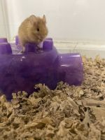 Mouse Rodents for sale in 4431 Remo Crescent Rd, Bensalem, PA 19020, USA. price: NA