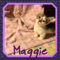 Munchkin Cats for sale in Hudson, FL 34667, USA. price: NA