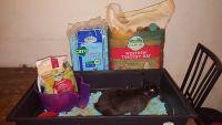 Netherland Dwarf rabbit Rabbits for sale in Orlando, FL 32810, USA. price: NA