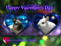 Netherland Dwarf rabbit Rabbits for sale in Myerstown, PA 17067, USA. price: NA