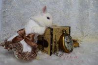Netherland Dwarf rabbit Rabbits for sale in Hayward, CA 94545, USA. price: NA