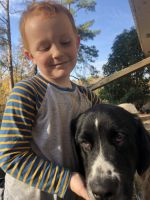 Newfoundland Dog Puppies for sale in Roanoke, AL 36274, USA. price: NA