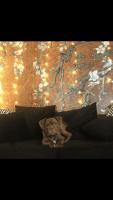 Old English Bulldog Puppies for sale in Norfolk, VA, USA. price: NA