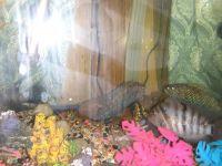 Oscar Fishes Photos