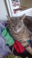 Other Cats for sale in Akron, OH, USA. price: NA