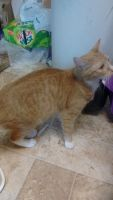Other Cats for sale in Greensburg, PA 15601, USA. price: NA