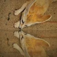 Other Cats for sale in Orange, CA, USA. price: NA