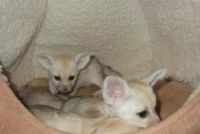 Other Cats for sale in Granite, WY 82059, USA. price: NA