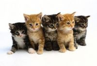 Other Cats for sale in Bakersfield, CA, USA. price: NA