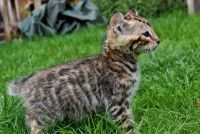 Other Cats for sale in Cincinnati, OH, USA. price: NA