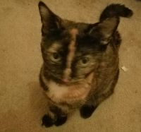 Other Cats for sale in 3232 Bardaville Dr, Lansing, MI 48906, USA. price: NA