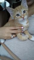Other Cats for sale in Fairview, NJ 07022, USA. price: NA