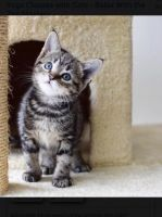 Other Cats for sale in 2671 International Dr, Ypsilanti, MI 48197, USA. price: NA