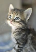 Other Cats for sale in Glendale, AZ 85303, USA. price: NA