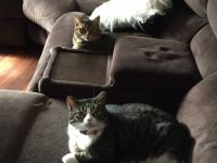 Other Cats for sale in St Paris, OH 43072, USA. price: NA