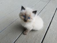 Other Cats for sale in Deer Park, WI 54007, USA. price: NA