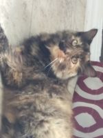Other Cats for sale in Harrison, AR 72601, USA. price: NA