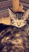 Other Cats for sale in Clarissa, MN, USA. price: NA