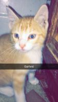Other Cats Photos