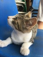 Other Cats for sale in Hayward, CA, USA. price: NA