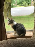 Other Cats for sale in Castle Rock, WA 98611, USA. price: NA