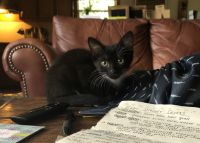 Other Cats for sale in McDonough, GA, USA. price: NA