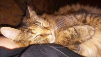 Other Cats for sale in Clinton, SC 29325, USA. price: NA