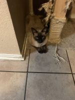 Other Cats for sale in San Antonio, TX 78254, USA. price: NA