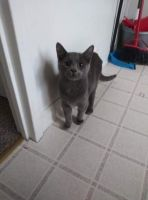 Other Cats for sale in Buffalo, NY 14220, USA. price: NA